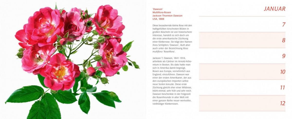 Rosen Kalender