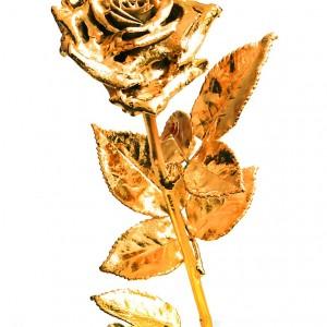 Ewige Rose (vergoldet), erhältlich im Rosenmuseum Steinfurth e.V.