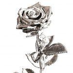 rose-versilbert-titelbild
